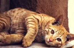 Smart Cat Flap