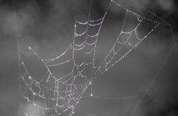mesh network UK