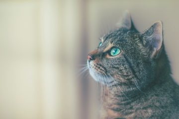 Sure Petcare Microchip Pet Feeder Connect